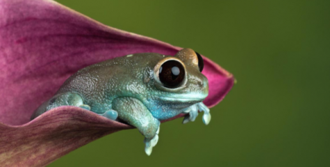 Tricky Trivia - Frogs